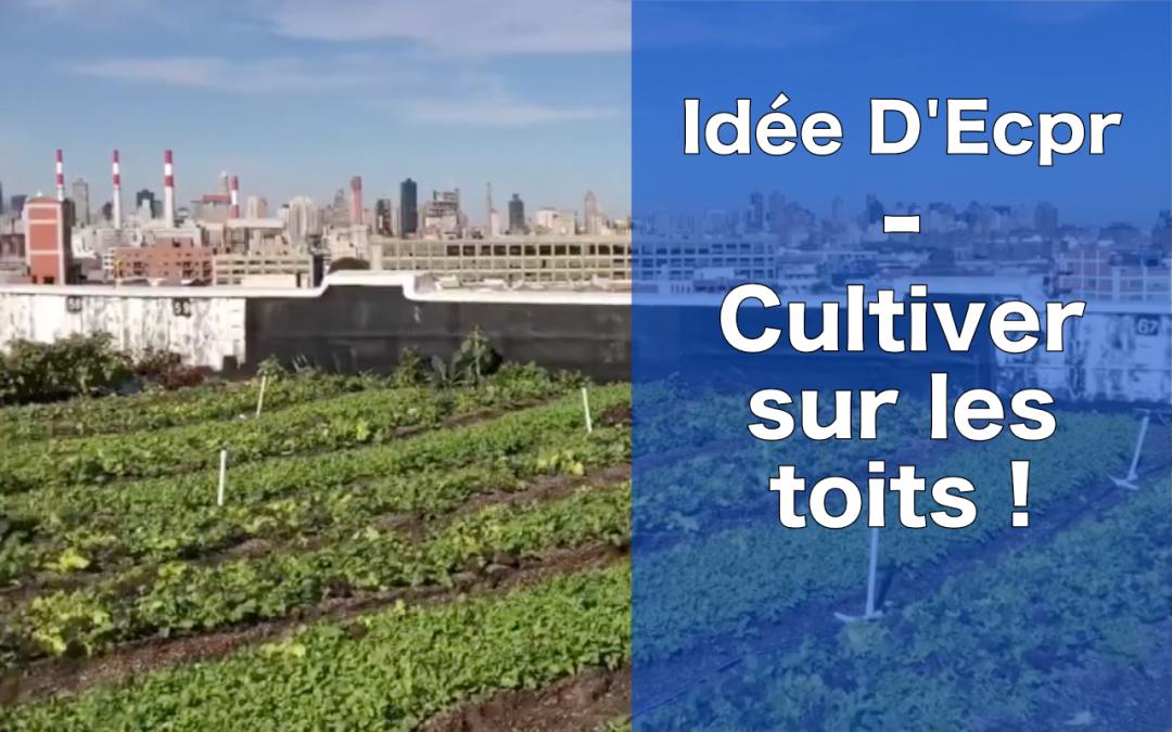 Idée d'Ecopreneur : cultiver sur les toits, une activité régénératrice ET rentable !