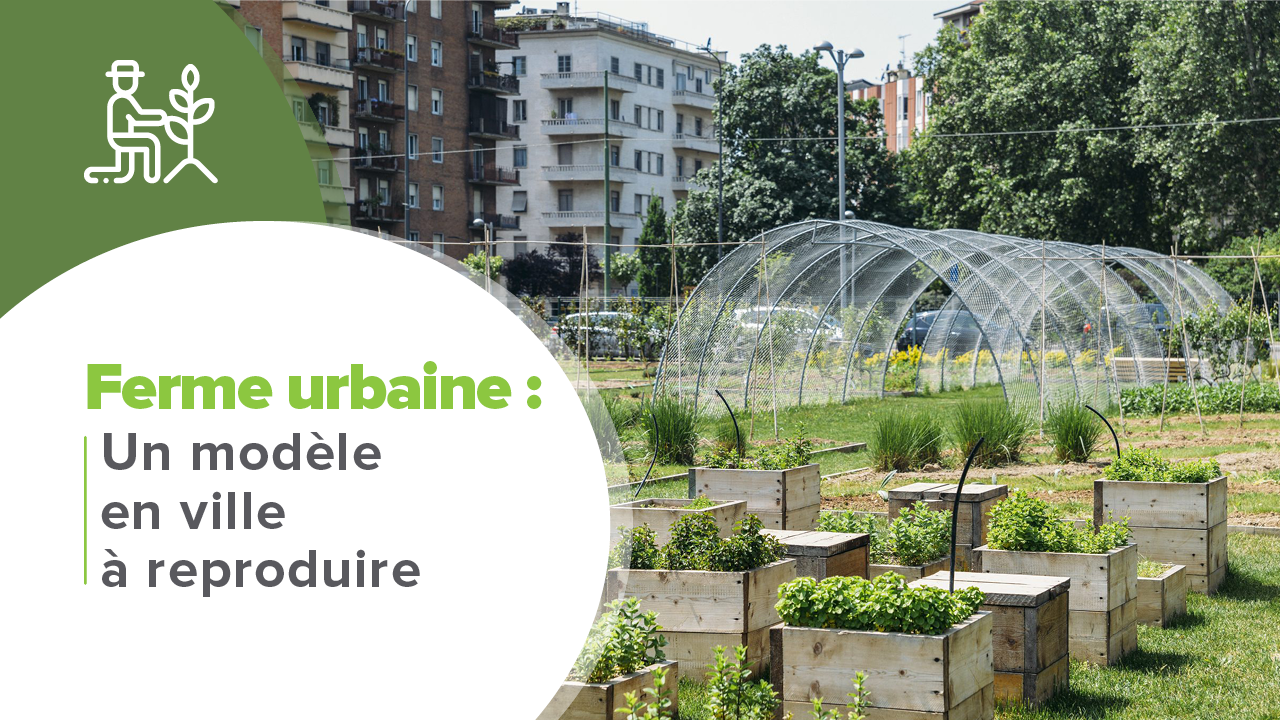 Ferme urbaine, Ferme urbaine : Un modèle en ville à reproduire