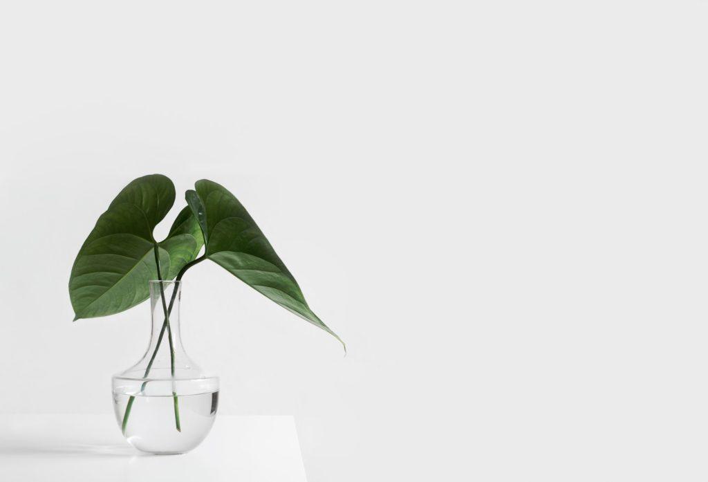 devenir minimaliste, Devenir Minimaliste | Les 15 Choses à Savoir pour se Lancer avec Succès